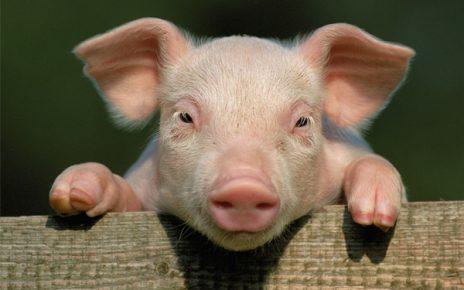 Ugandans Are The Baddest Pork Eaters 4