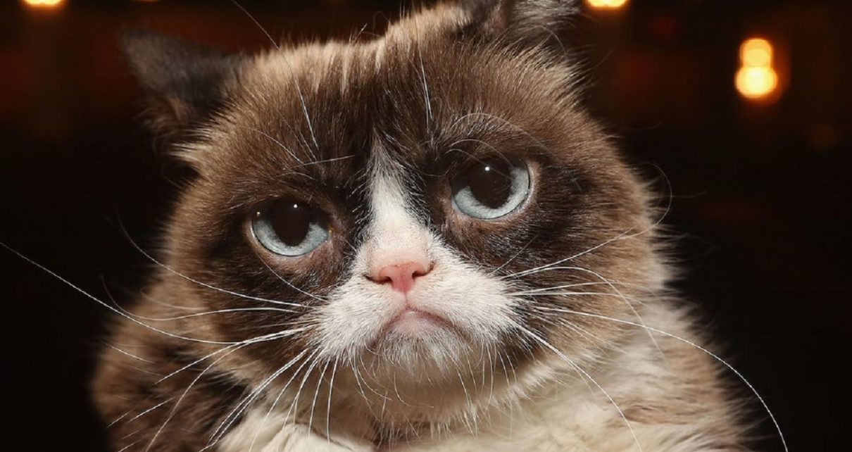 Famous Grumpy Cat 'Tardar Sauce' Dies At 7 | Spurzine