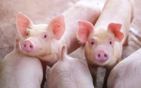 New Swine Flu In China Could Become A Pandemic Threat | Spurzine